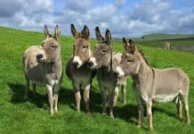 donkey featured image